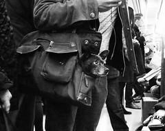 nyc dog bag subway mta carrier