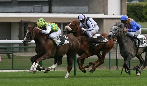 Horses Insight  (12)