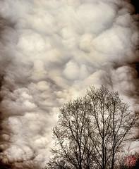 Old Time Clouds (Mitymous) Tags: sky house tree monochrome clouds yard platinum vertorama winter2016