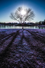 The World's Lungs (Brooke Wrightt) Tags: trees winter arizona texture nature backlight landscape shadows purple outdoor fineart surreal illusion dreamy backlit baretrees backlighting fineartphotography vibrance naturephotography surrealphotography