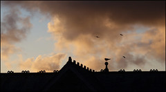 Helston roof top with gulls (Philip Watson) Tags: silhouette clouds cornwall gulls helston