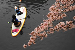 DSC07798 (Mrockdaimajin) Tags: japan river spring   sakura yokohama