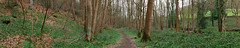 Bluebells in Lower Hartley Bank Wood, Kikburton. (kyliepics) Tags: gimp olympus hugin e520 evolt520 olympuszuikodigital1122mmf2835