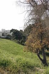 Amman - Jordan  (abidabdulrahman) Tags: travel trees flower green art love forest photoshop flickr sony amman jordan       vscocam rx100m3