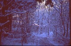(bensn) Tags: trees winter light snow film japan forest 50mm woods pentax slide velvia 100 nagano industar f35 mzs
