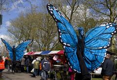 vlinder steltenlopers the s factory 2016 6 (E : info@thesfactory.eu T :06-23077206) Tags: butterfly blauw butterflies bleu papillon stilts stiltwalker vlinders vlinder stiltwalkers