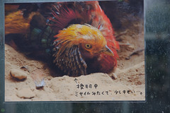 20160320-DSC_4137.jpg (d3_plus) Tags: park street sky plant flower nature animal japan zoo nikon scenery daily telephoto bloom  tele streetphoto toyama nikkor    dailyphoto   70210  thesedays     70210mm  70210mmf4 zoomlense zoologicalgarden       70210mmf4af 702104 toyamapref d700 nikond700  aiafnikkor70210mmf4s 70210mmf4s