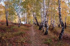 DSC_6064 (Rustam Bikbov) Tags: autumn september 2012    sverdlovskoblast