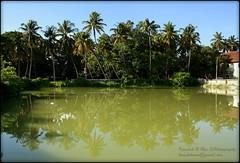 Kochi (Kaushik.N.Rao) Tags: trees india reflection green nature landscape pond colours coconut kerala kochi 2k15