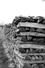 Woodpile (stefan_wolpert) Tags: blackandwhite abstract evening countryside concept bnw woodpile blackandwhitephotography endofday eveninghours bnwlife