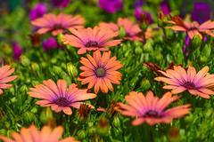 floral fix (boobie40) Tags: nikon flickrsbest d810