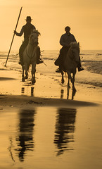 Couple on the Beach (hehirt) Tags: horses france nature aminals camargue