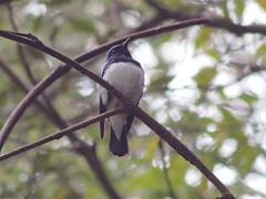 (Polotaro) Tags: bird nature pen olympus  zuiko  4      fzuiko300mmf45 epm2
