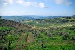 Artimino Landscape 3