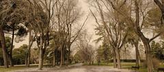 Walk (Alejandra Valencia Ocampo) Tags: madrid city naturaleza verde arbol nikon ciudad 18 55 ciy nikor