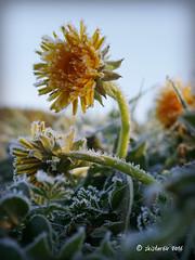 frosty (skistar64) Tags: outside frost outdoor frosty krnten carinthia april springtime frhling pisweg daham drausen reinfrost
