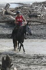 IMG_EOS 7D Mark II201604030564 (David F-I) Tags: horse equestrian horseback horseriding trailriding trailride ctr tehapua watrc wellingtonareatrailridingclub competitivetrailriding sporthorse equestriansport competitivetrailride april2016 tehapua2016 tehapuaapril2016 watrctehapuaapril2016