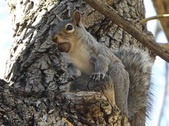 Funny Squirrel (car show buff1) Tags: flowers blue sunset red canada nature robin landscapes woodpecker jay waterfront tulips cardinal dove flag wildlife trails finch chipmunk sparrow daffodil marigold crested oakville ravines on