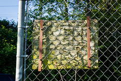 tattered sign (kevin.boyd) Tags: old green fence dirty chain link algae wrecked plywood tattered grimy tatters
