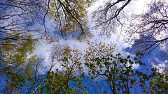 Skyward! (Peter J. Ham Many thanks for viewing my pics.) Tags: life blue trees sky cloud colour green sunshine outdoors cheshire air atmosphere arbre