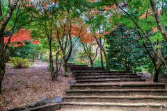 IMG_6136_7_8_tonemapped (newbs216) Tags: autumn trees landscape hdr mtwilson