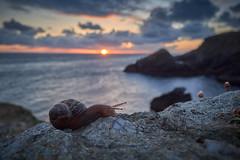 To snail the sea (cyril4494) Tags: sea cloud mer france macro sunrise de soleil cloudy snail ile bretagne belle nuage escargot lever nuageux