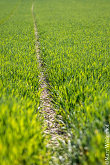Der Weg im Grnen / The green way (Marc Wildenhof) Tags: macro germany deutschland hessen grn makro nahaufnahme weg oberursel stierstadt canoneos7dmarkii