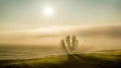 Real Dreams. (drstar.) Tags: sunset tree fog flickr dreams wintersun flickrturkey