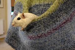 P1000090 (edmundrt) Tags: pet cute gerbil lumix rodent panasonic lx7 lumixlx7 dmclx7