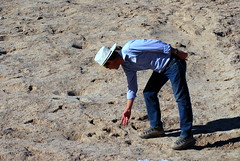 20160131 Sunset Road Archeological Dig - Guide Pointing to Tracks (lasertrimman) Tags: road sunset footprints dig archeological sunsetroadarcheologicaldig 20160131
