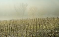 _DSC3389 (Giuseppe Cocchieri) Tags: trees mist tree gelo alberi landscape countryside nikon frost frog campagna z nikkor nebbia albero paesaggio allaperto