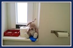 toilet pet (maramillo) Tags: assemblage meeting tcf unanimous maramillo