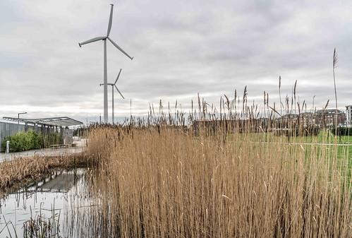 Wind Powered Public Park In Clongriffin Dublin [Father Collins Park]-110947