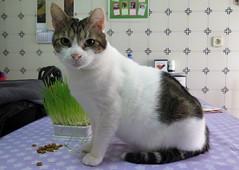 080-January'16 (Silvia Inacio) Tags: cats cat gatos gato soneca