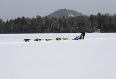 (Jean Arf) Tags: winter dog lake snow ice frozen mirrorlake iceskating skating february sled adirondack adk lakeplacid 2015