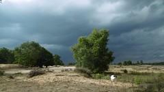 jessie (Nelis Zevensloot) Tags: heath veluwezoom heide zandverstuiving velp rozendaal bruyre sanddrift rozendaalseveld sandverwehung