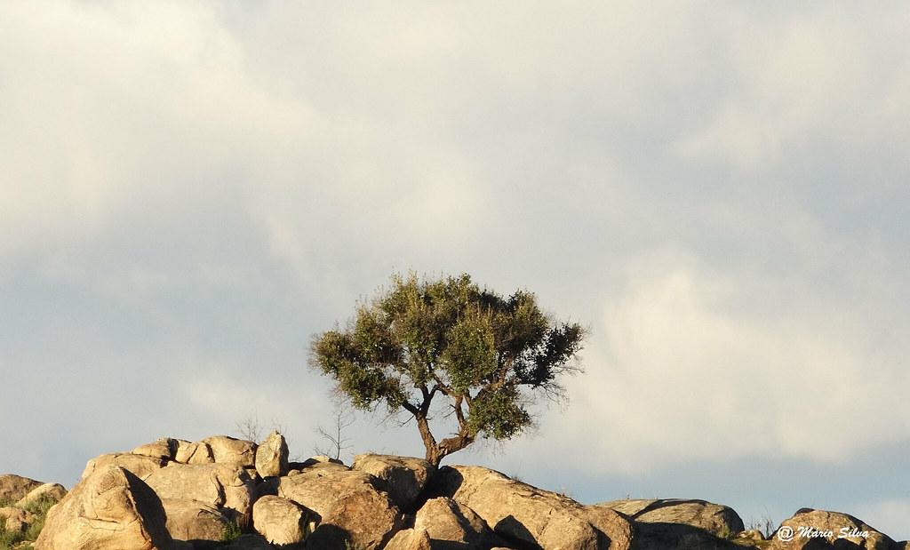 Águas Frias (Chaves)  - ... a árvores no meio das fragas ...