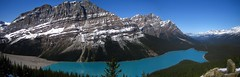 Peyto Lake Panorama ([dan_gildor]) Tags: travel mountain lake viewpoint travelblog banffnationalpark peytolake icefieldsparkway travelphotography glaciallake travelphotographyblue