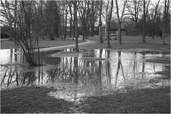 Sony *47_a (KKS_51) Tags: frankfurt stadtpark hchst berschwemmung regenzeit sonyalpha7ii
