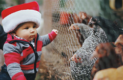 skeptical about the chickens (manyfires) Tags: christmas family portrait baby chickens love film childhood analog 35mm fence infant holidays child son nikonf100 henry santahat chickenwire hens