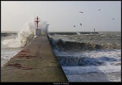 Tempte (HimalAnda) Tags: ocean sea mer seagulls storm france birds wave splash vague tempte vende mouettes saintgillescroixdevie canoneos70d eos70d stphanebon
