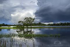 Chuva na Amaznia (Rita Barreto) Tags: rio gua flora chuva nuvens amazonas amaznia fluvial guadoce riosolimes iranduba nortedobrasil nuvenscarregadas cheianaamaznia chuvanaamaznia vegetaodaamaznia