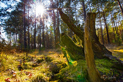 Forest (kinga.lubawa) Tags: las trees tree green colors forest canon zielony kolory kolorowe drzewa canon6d