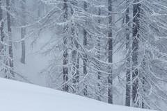 L'Anima del Bosco (Roveclimb) Tags: wood schnee trees winter mountain snow alps nature alberi forest ticino natura powder neve neige snowfall blizzard alpi fontana montagna scialpinismo bosco nevicata skitouring polvere bufera airolo trecroci valbedretto bedretto ossasco valruino pianazo