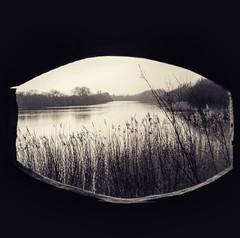 Par la lucarne (Cline Rousselot (LookINCEll)) Tags: nature paysage roseaux tranquilit picardie baiedesomme lucarne parcdumarquenterre parlalucarne