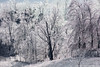 """Ice Forest Cont • <a style=""""font-size:0.8em;"""" href=""""http://www.flickr.com/photos/65051383@N05/25436721993/"""" target=""""_blank"""">View on Flickr</a>"""