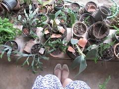 70/366 Endless plants (JessicaBelotto) Tags: nature plantas foto natureza paz days honey feets pés fotografia projeto vestido exposição vasos fotográfico sapatilha 366