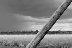 Obtuse (taylordidthis) Tags: flowers nature grass rural countryside angle country farming lincolnshire pole diagonal leaning far slant birdbox bucolic obtuse owlbox quadring