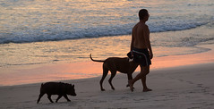 House-pig, dog and owner, Playa Santa Teresa, Costa Rica (maxunterwegs) Tags: dog chien co praia beach strand pig costarica perro hund cachorro puntarenas santateresa schwein playasantateresa cbano