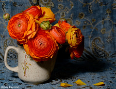 Rannculos anaranjados - Orange ranunculus (Eva Ceprin) Tags: flowers red naturaleza flores cup nature yellow rojo ranunculus amarillo bundle ramo naranja jarra ramillete rannunculus rannculo rannculos francesillas nikond3100 tamron18270mmf3563diiivcpzd evaceprin